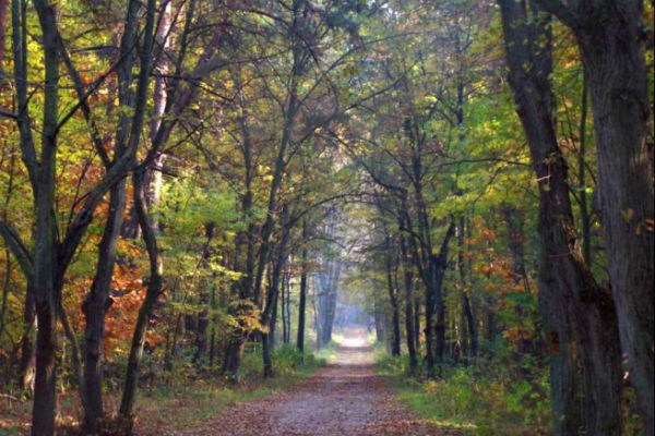Saperzy z lasu wyjdą wcześniej? - Grodzisk News