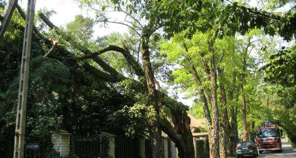 Stare drzewa zagrażały mieszkańcom - Grodzisk News