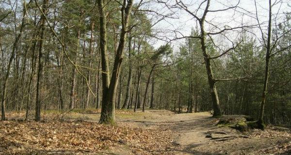 Chcą ochronności dla Lasu Młochowskiego. Co to oznacza? - Grodzisk News