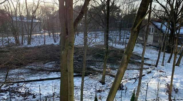 Nielegalna wycinka drzew w Milanówku? Burmistrz: Prawdopodobnie samowolka [AKTUALIZACJA] - Grodzisk News