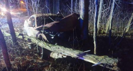 Żabia Wola. Uderzył w drzewo, a to nie pierwszy drogowy wybryk. Są zdjęcia - Grodzisk News