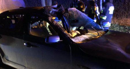 Kolizja osobówki z łosiem w Maryninie. Zwierzę nie przeżyło [FOTO] - Grodzisk News