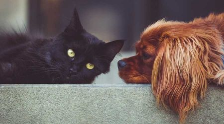 Bezpłatne czipowanie psów i kotów - Grodzisk News