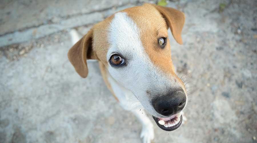 Wyższe mandaty za spacer z psem bez smyczy - Grodzisk News