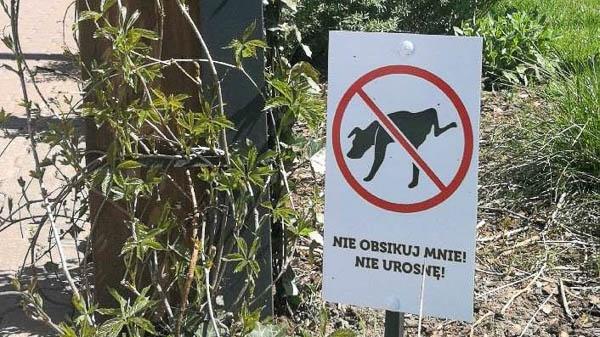 Grodzisk. Nowe tablice rozwiążą psi kłopot? - Grodzisk News