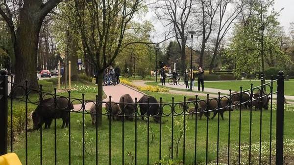 Niespodziewani goście w Parku Skarbków [FOTO] - Grodzisk News
