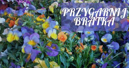 Grodzisk rozda kwiaty mieszkańcom - Grodzisk News