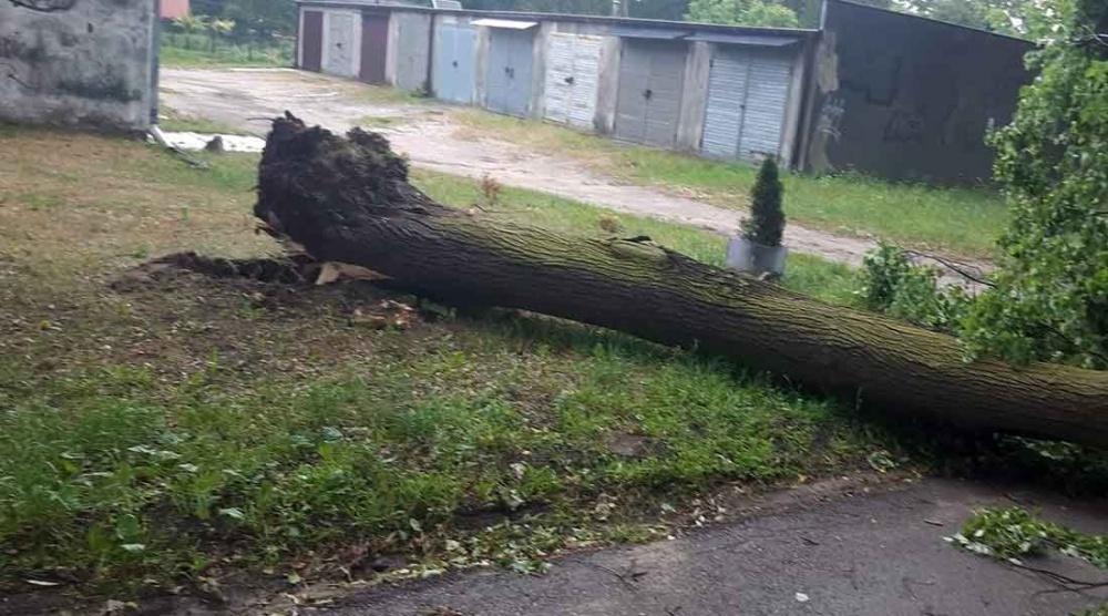 Mocny wiatr znów łamał drzewa [FOTO] - Grodzisk News