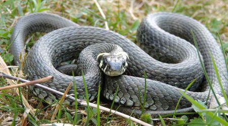 Wąż w przedszkolnej piaskownicy - Grodzisk News