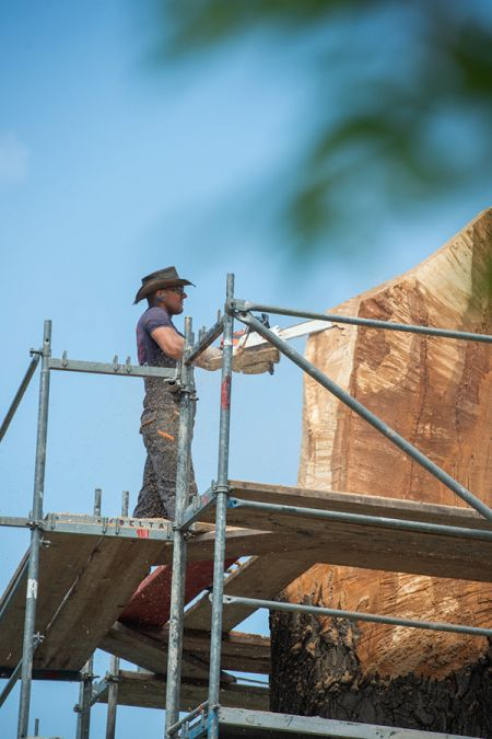 Drzewo na Stawach Walczewskiego zamieni się w rzeźbę [FOTO] - Grodzisk News