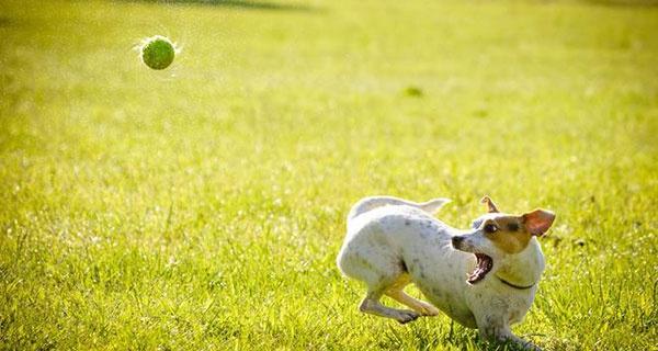 Pierwsze podejście do psiego parku zabaw w Grodzisku nieudane - Grodzisk News