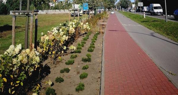 Grodzisk. Ponad 10 tysięcy nowych roślin wzdłuż ul. Królewskiej [FOTO] - Grodzisk News