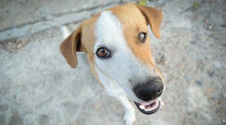 Grodziska gmina zaszczepi twojego psa przeciwko wściekliźnie. Ponowiła przetarg - Grodzisk News