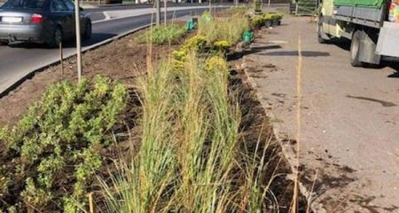 Grodzisk. Posadzą kilkanaście tysięcy roślin przy Traugutta i Granicznej - Grodzisk News