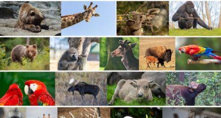 Włącz się w zbiórkę zwierzęcych przysmaków. Trafią do warszawskiego ZOO - Grodzisk News