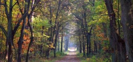 Las Młochowski częściowo oczyszczony