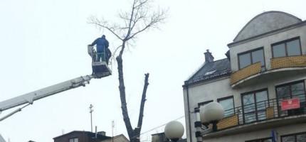 Wycięli drzewa na deptaku