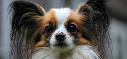 Bezpłatne szczepienia psów w grodziskiej gminie za pasem. Jest lista przychodni