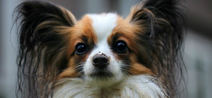 Zaszczep psa na koszt gminy