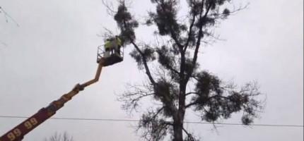 Drzewo przy przystanku zagrażało ludziom