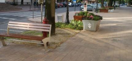 Nowe drzewa w centrum miasta cieszą oko?
