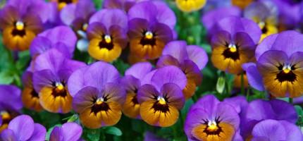 Na wiosnę Grodzisk stanie się kolorowy