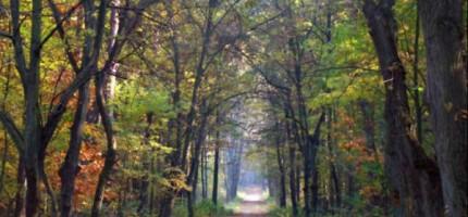 Saperzy z lasu wyjdą wcześniej?