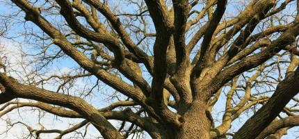 Więcej drzew w przestrzeni miejskiej