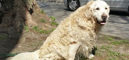 Straż troski o zwierzęta