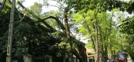 Stare drzewa zagrażały mieszkańcom