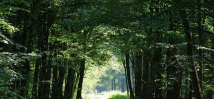 Najwyższe zagrożenie pożarem w lasach
