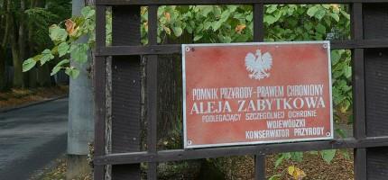 Kilkanaście nowych pomników przyrody w gminie