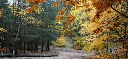 Wycinka drzew w Lesie Młochowskim