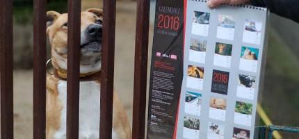Kupisz kalendarz – pomożesz bezdomnym zwierzętom