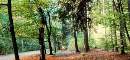 Ćwierć miliona na pielęgnację drzew