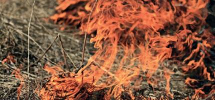 Ponad 50 pożarów traw w powiecie