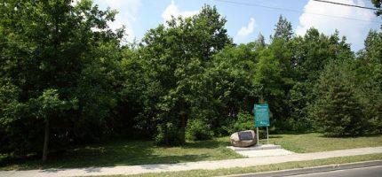 Oblicze Parku Lasockiego do poprawki