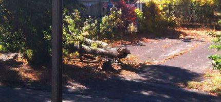 Wichura łamie drzewa w regionie