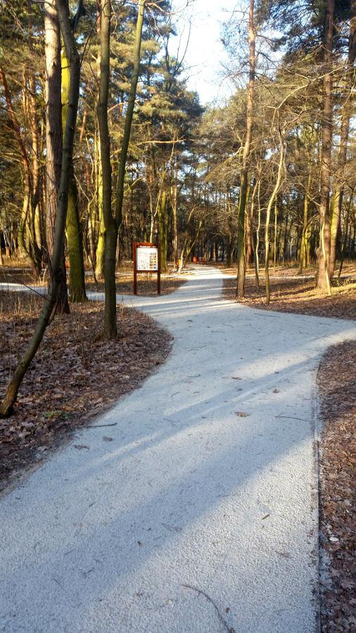 park-lasockiego-zrewitalizowany-fot-wieslawa-kwiatkowska4