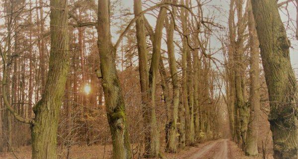 Wypielęgnowali ponad dwa tysiące drzew