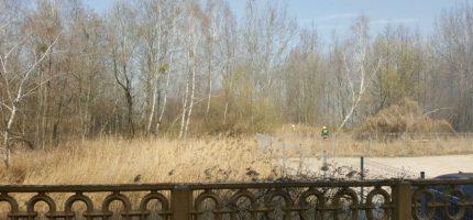 Pożar łąki w Milanówku. Kilka zastępów walczyło z ogniem