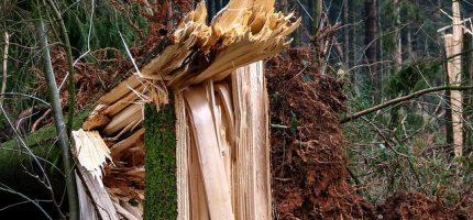 Złamane drzewa w Milanówku i Podkowie