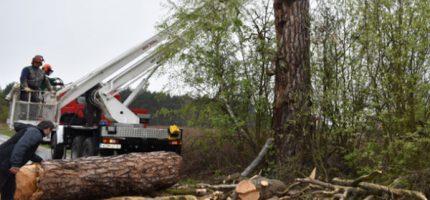 200-letni pomnik przyrody poszedł pod topór [FOTO]