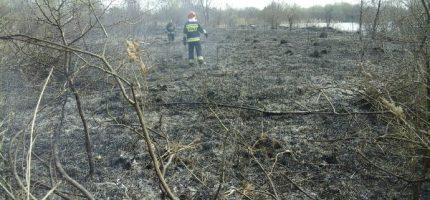Wypalanie traw w Natolinie? [FOTO]