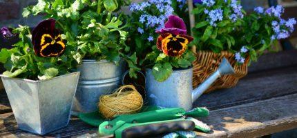 W Milanówku też wybiorą najładniejszy ogród. Maja Popielarska w jury