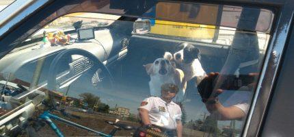 Straż miejska: Nie zostawiajmy zwierząt w nasłonecznionych autach