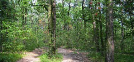 Dotacja na pielęgnację prawie czterech tysięcy drzew