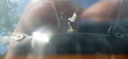 Pies zamknięty w nagrzanym aucie. Interweniowała straż miejska
