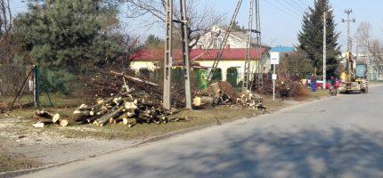 Wycinka drzew konieczna przy budowie ścieżek rowerowych