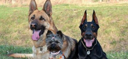 Zaszczep bezpłatnie psa w Grodzisku